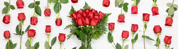 Flores Rosas Flores A Domicilio Rosas Personalizadas Flores